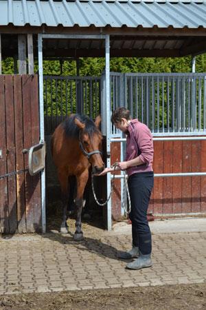 Begeleiding van Paard en Ruiter