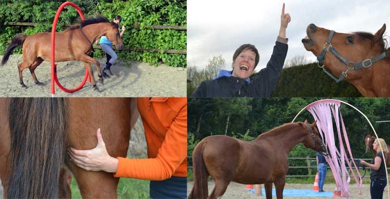 homepage paardenfeest