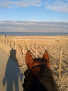 Persoonlijke ontwikkeling en groei met mijn paard