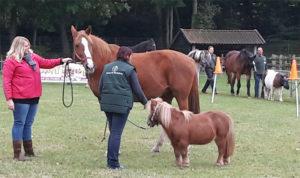 Pennydag 2016 Paardenkamp Soest