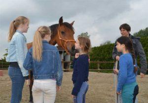 paardenworkshop