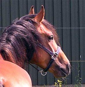 Paard gespannen mond