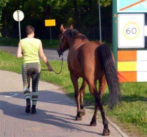 Paard met vertrouwen