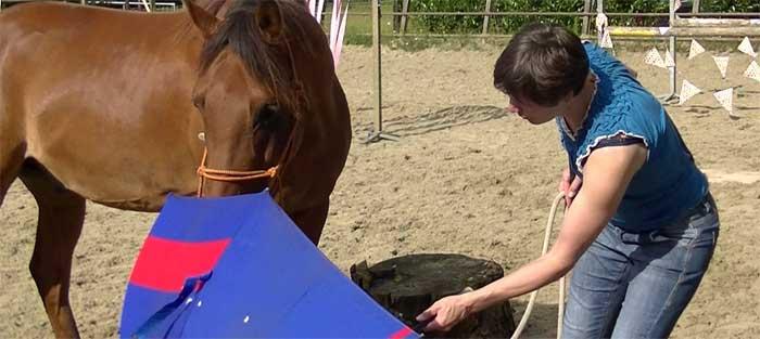 Schriktraining paard verdieping