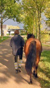 Analyse paard stap