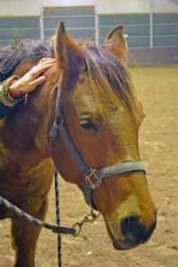 Paardenmassage ontspanning