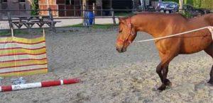 Schriktraining paard flesjes