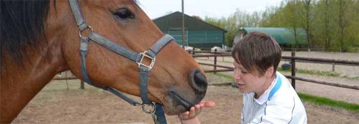 Je paard belonen. Hoe en waarom? Wel of geen voedselbeloning?