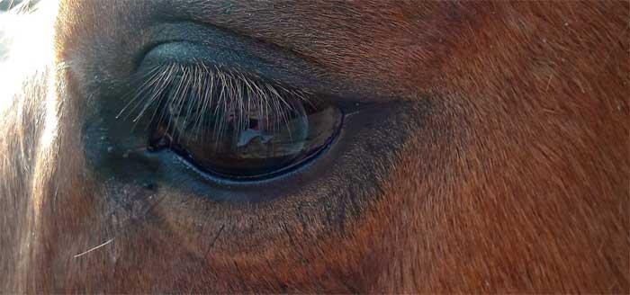 Blessures bij je paard voorkomen? Leer goed observeren!