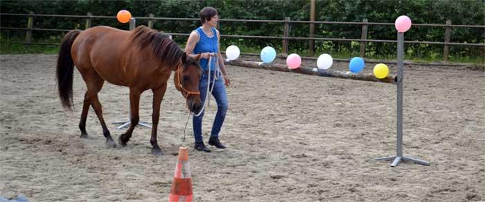 samenwerken met je paard