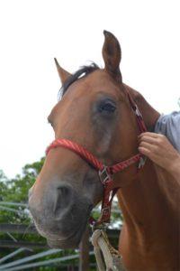 Bodywork met gepensioneer paard