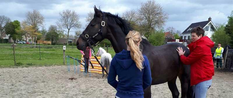 Wat mensen zeggen over Paardenfeest workshops, training en lessen