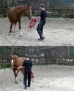 trainen zonder hulpteugels