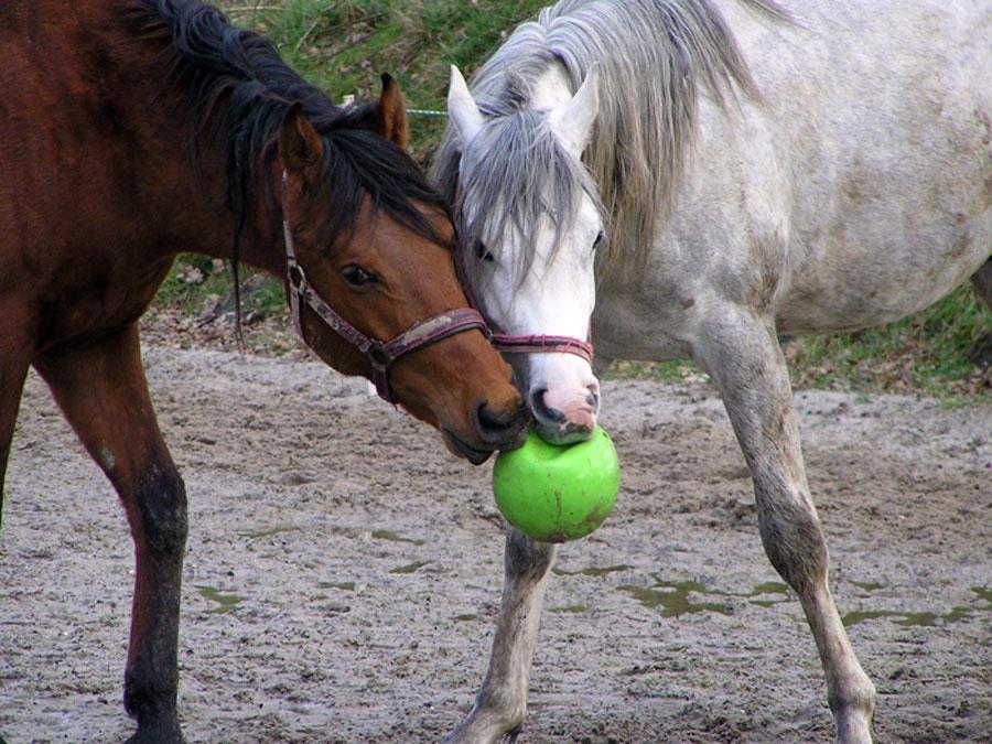 Blogs en Vlogs Jolien Dalenberg op Paardenfeest