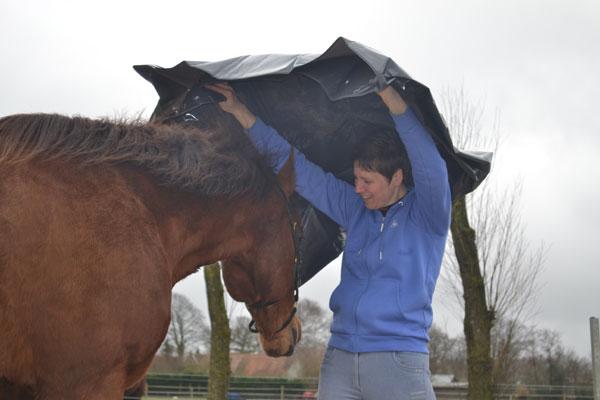 Ontspannen werken met je paard