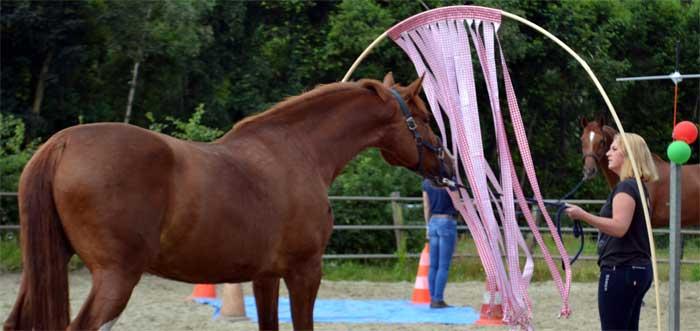 Workshop schriktraining paard