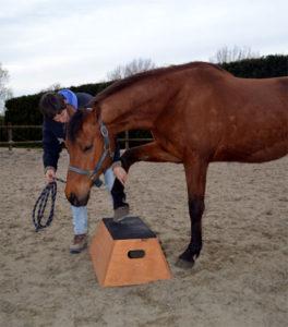 Paard op het blok leren staan
