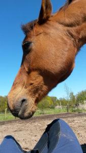 Band met je paard samen