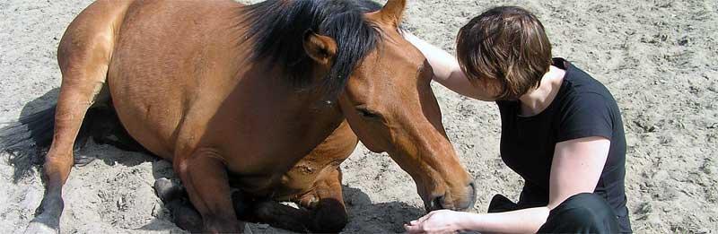 Band met je paard