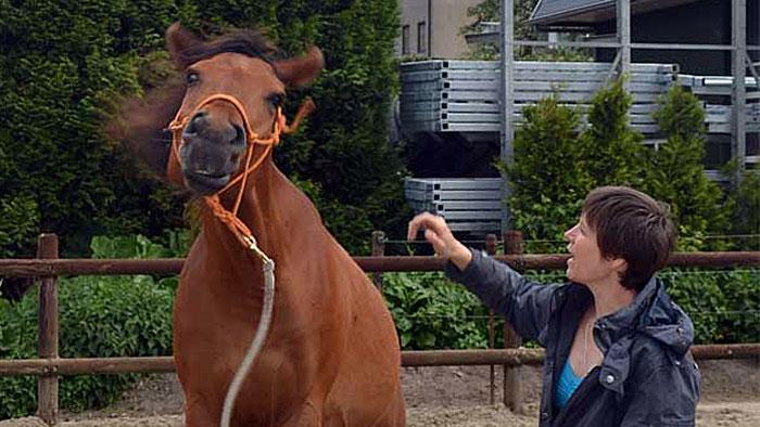 Paard nee schudden leren film met uitleg