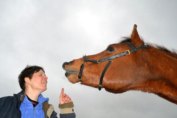 Paard Flemen leren