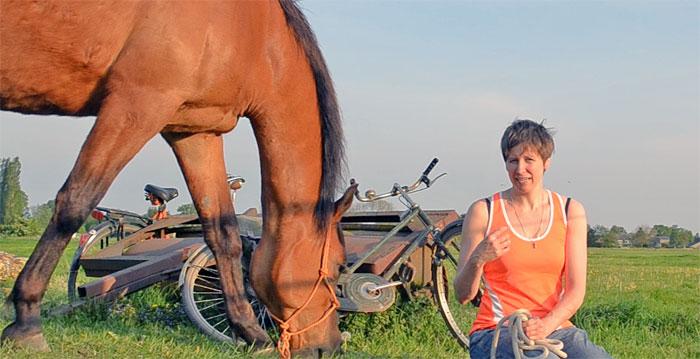 video paarden filmpjes