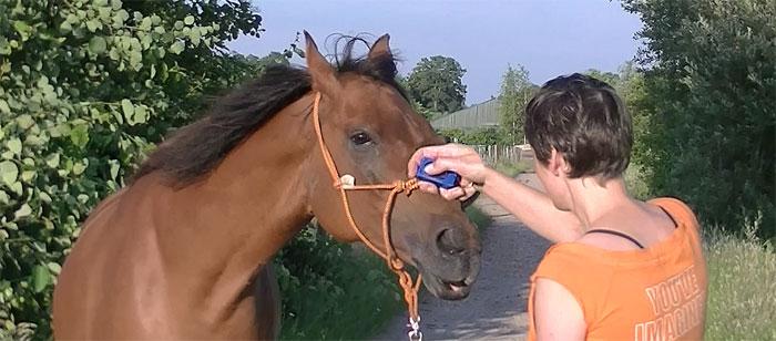 Clickeren met paarden