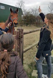 Kinderfeestje paard