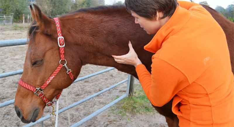 Massage paard Utrecht