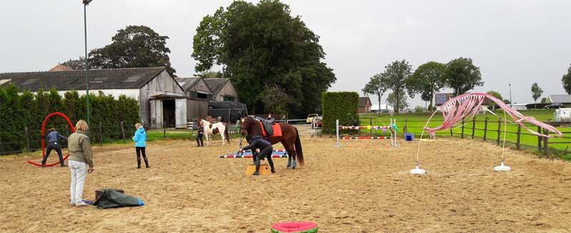 workshop met paarden