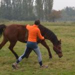 Ontspannen paard in training