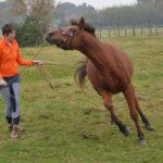 Paard met spanning