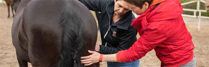 workshop leer je eigen paard masseren