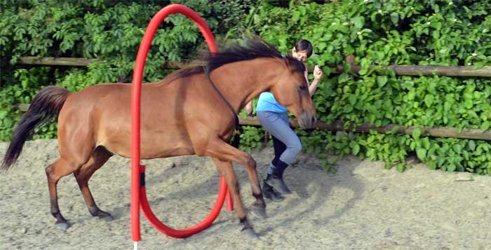 Coaching en les met paard