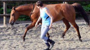 grondwerk paard les