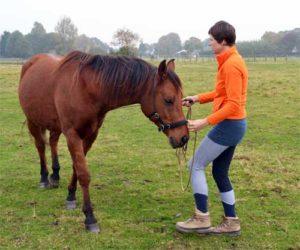Grondwerken paard