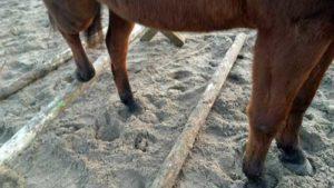 Les met paard