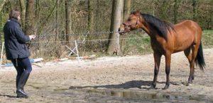Paard geen vertrouwen