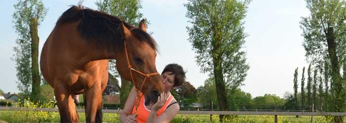 Heeft jouw paard respect