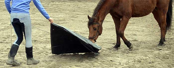 Schriktraining paard privé les en coaching