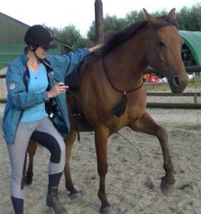 Lichaamsbewustzijn samen met paard