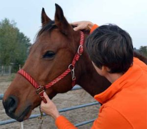 Paardenmassage