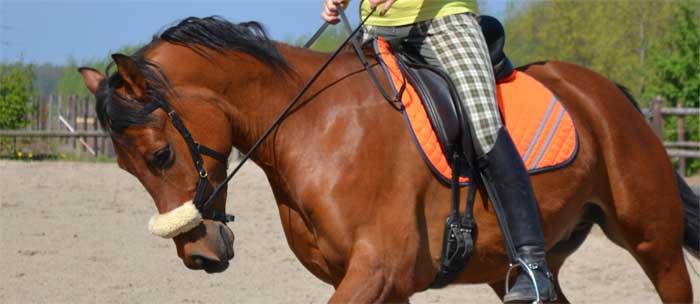 Valse knik paard