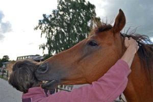 knuffel paard beloning