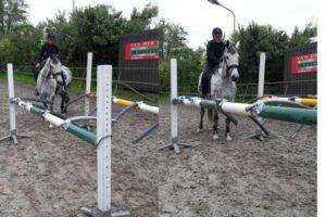 Vertrouwen opbouwen paard