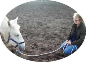 Recensie Paardenfeest