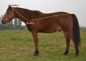 Wervelkolom paard