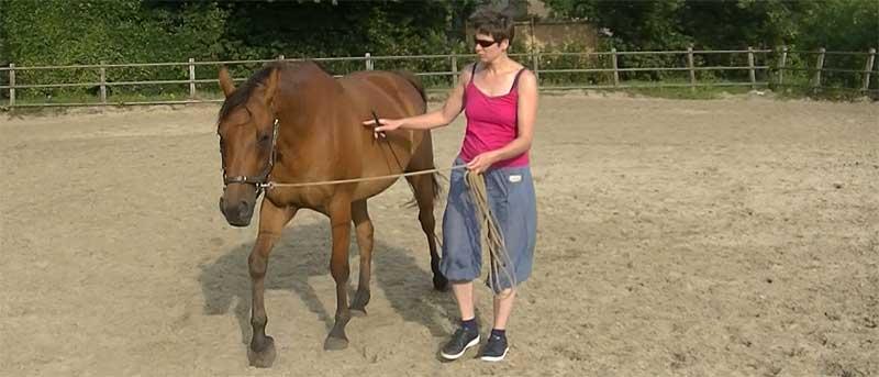 paard met pensioen