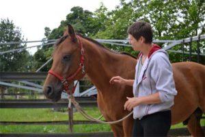 aanraken als communicatie met paard