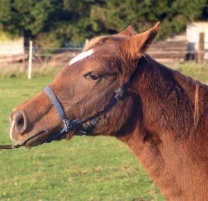 Afgesloten paard